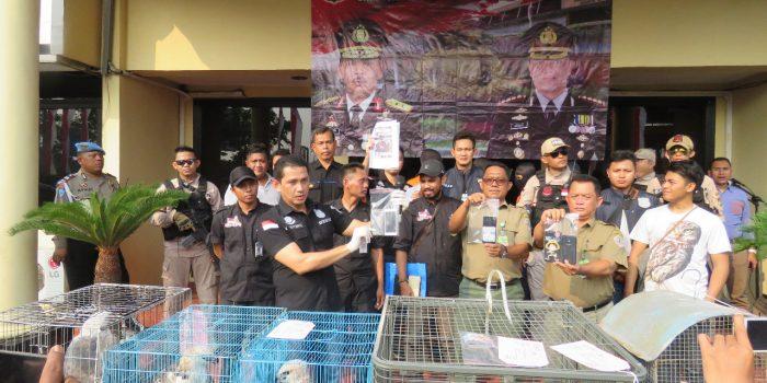 Polres Jakarta Barat Tangkap 5 Pelaku Penjual Satwa Liar