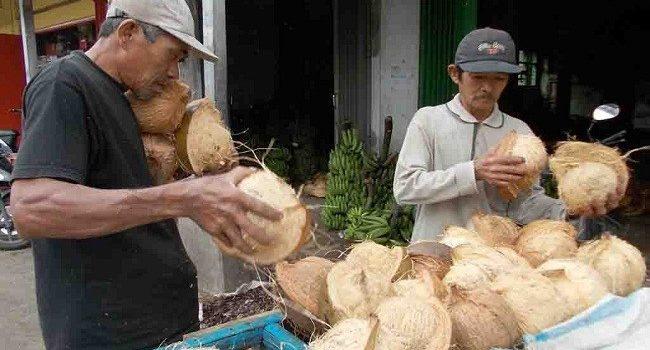 Harga Kelapa Anjlok, Ekonomi 2 Kecamatan di Riau Ini Terhimpit