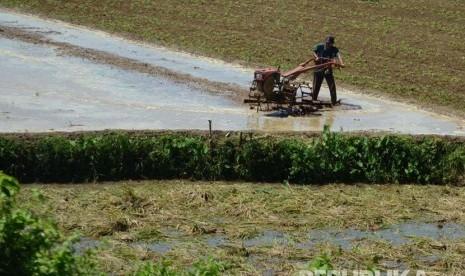 Petani Sayur di Cianjur Terancam Gagal Panen