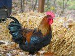 Perkosa Ayam dan Anjing, Pria Ini Dijebloskan ke Penjara