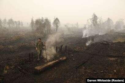 Greenpeace Nyatakan 4,4 Juta Hektar Hutan Indonesia Terbakar Sejak 2015-2019